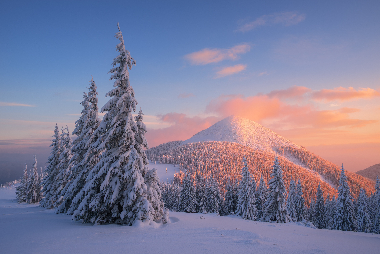 carpathian-mountains-5243x3500-snow-winter-sunset-pine-trees-4k-5626